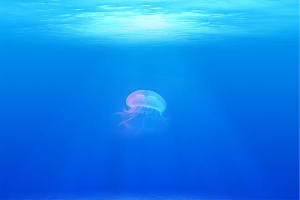 picades de medusa
